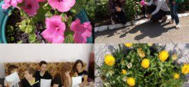«День цветов»